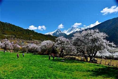 常規拼車線路:川藏南线+色达+稻城亚丁→拉萨10日游也可加青藏線行程