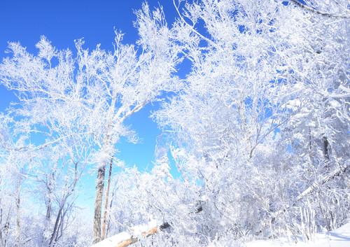 哈尔滨+雪乡+长白山 8日 | 在欧式建筑群里穿梭,感受银装素裹中泡温泉的两重天