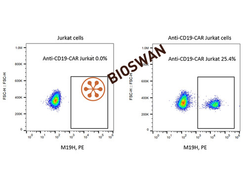 Mouse Anti-Mouse FMC63 scFv Monoclonal Antibody, PE