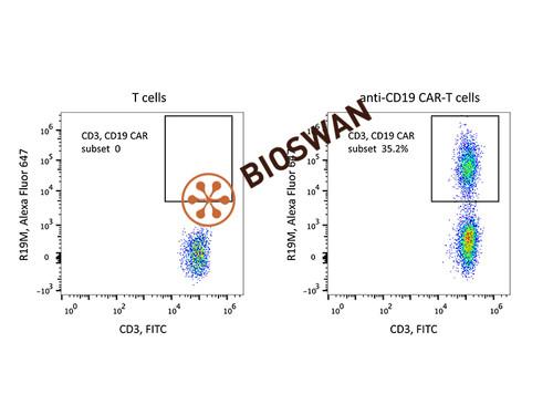 Rabbit Anti-Mouse FMC63 scFv Monoclonal Antibody, Alexa Fluor 647