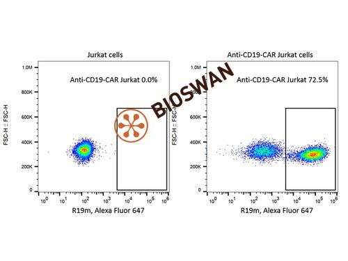 Rabbit Anti-Mouse FMC63 scFv Monoclonal Antibody(100 tests)
